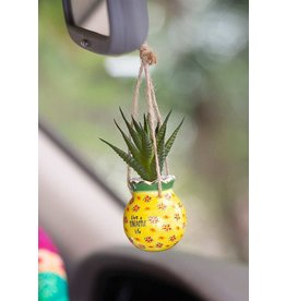 Natural Life Hanging Succulent- Pineapple