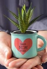 Natural Life Best Mom Every Mini Mug Succulent