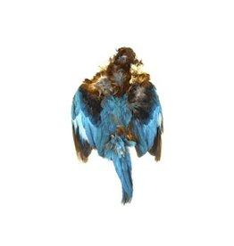 SHOR SHOR Kingfisher Skin