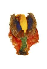 SHOR SHOR Golden Pheasant Skin
