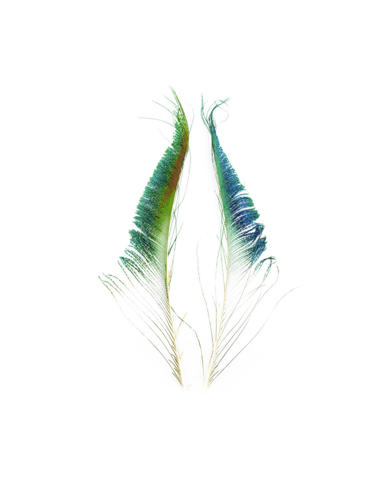 SHOR SHOR Peacock Swords 2pk (NOT PAIRED)