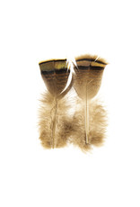 SHOR SHOR Ozark Iridescent Turkey Tail