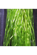 Hareline Life Flex - Light Olive