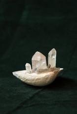 Jen Deibert Little Shell Crystal Sculpture