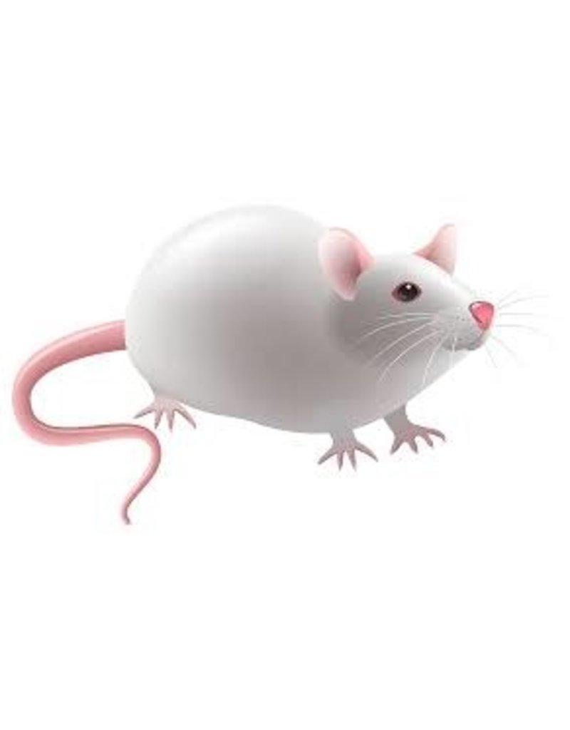 Fresh Live Feeder Mouse
