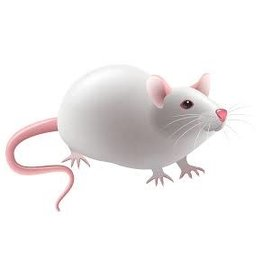 Frozen Adult Mice