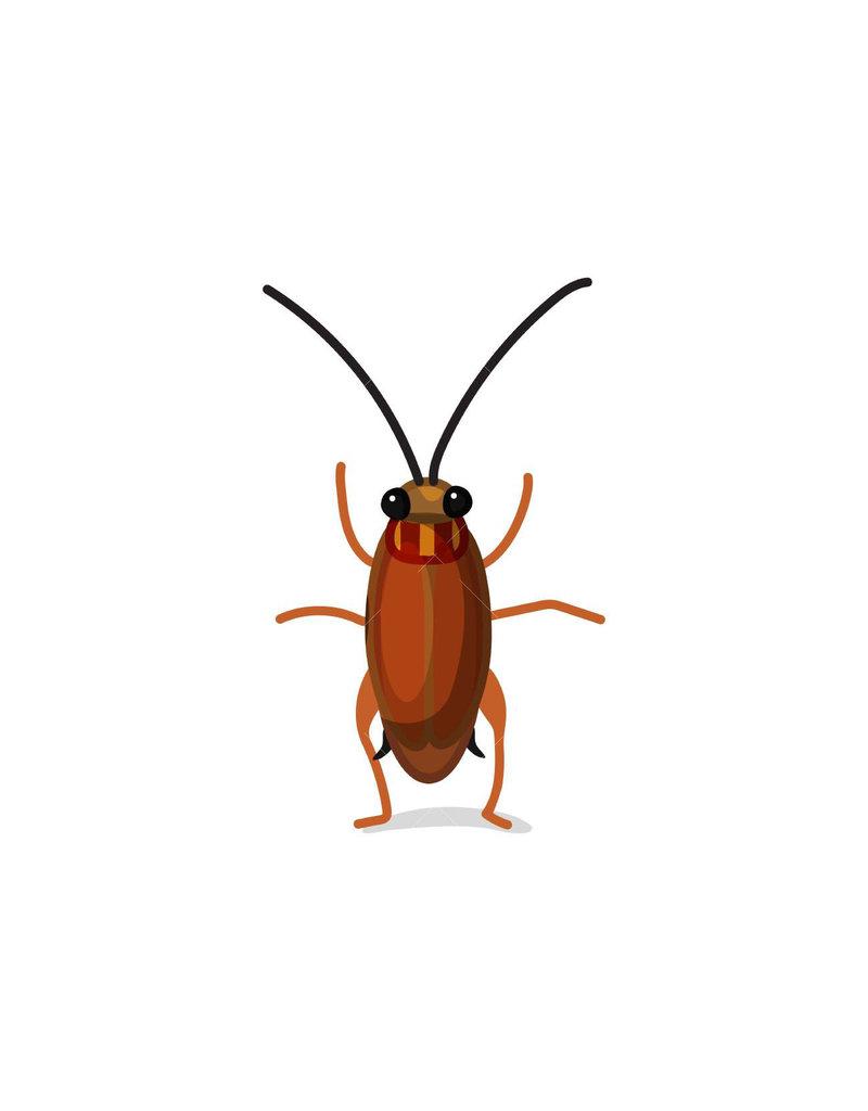 """Feeder Dubia Roach 1/4"""" 25ct PK"""