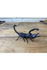 Asian Scorpion