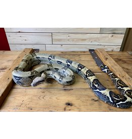 Red Tail Boa (4')- Female