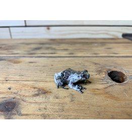 Bird Poop Tree Frog