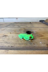 """Baby Red Eye Tree Frog  (2-3"""")"""