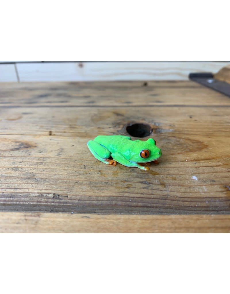 "Baby Red Eye Tree Frog  (2-3"")"