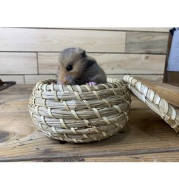 Teddy Bear Hamster  (DOB: 1/8/21) Female