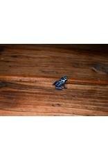 Blue Sipaliwini Dart Frog