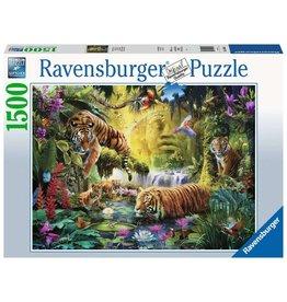 Ravensburger Tranquil Tigers 1500pc