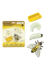 Safari Life Cycle of a Honey Bee