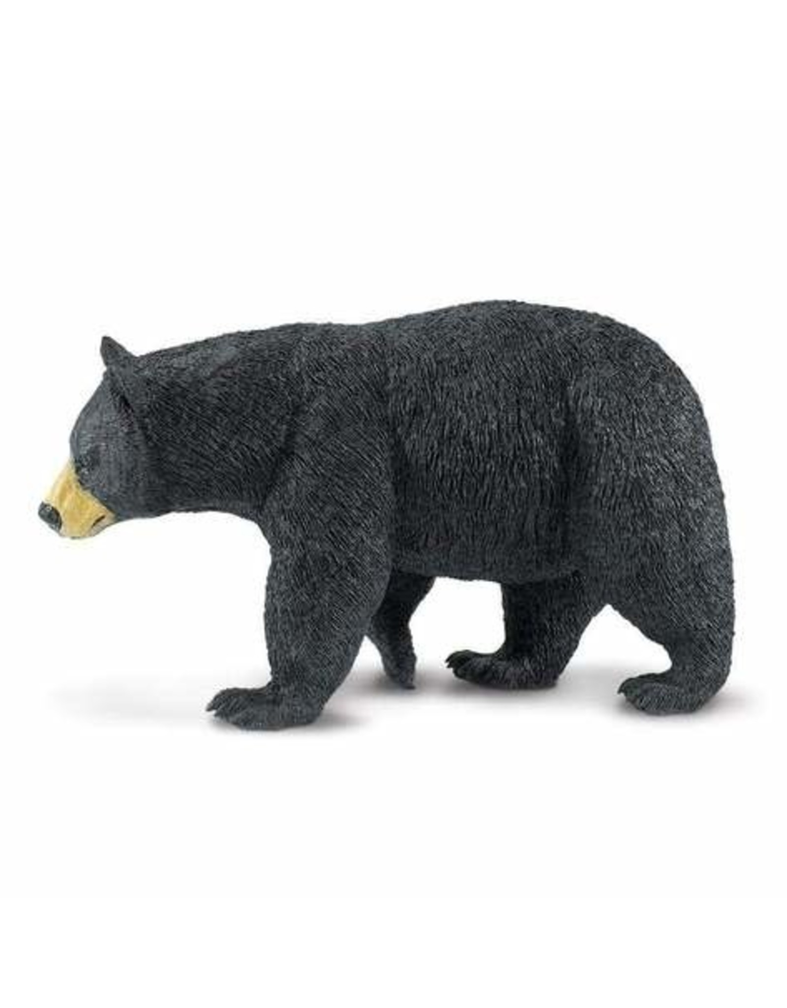 Safari Black Bear
