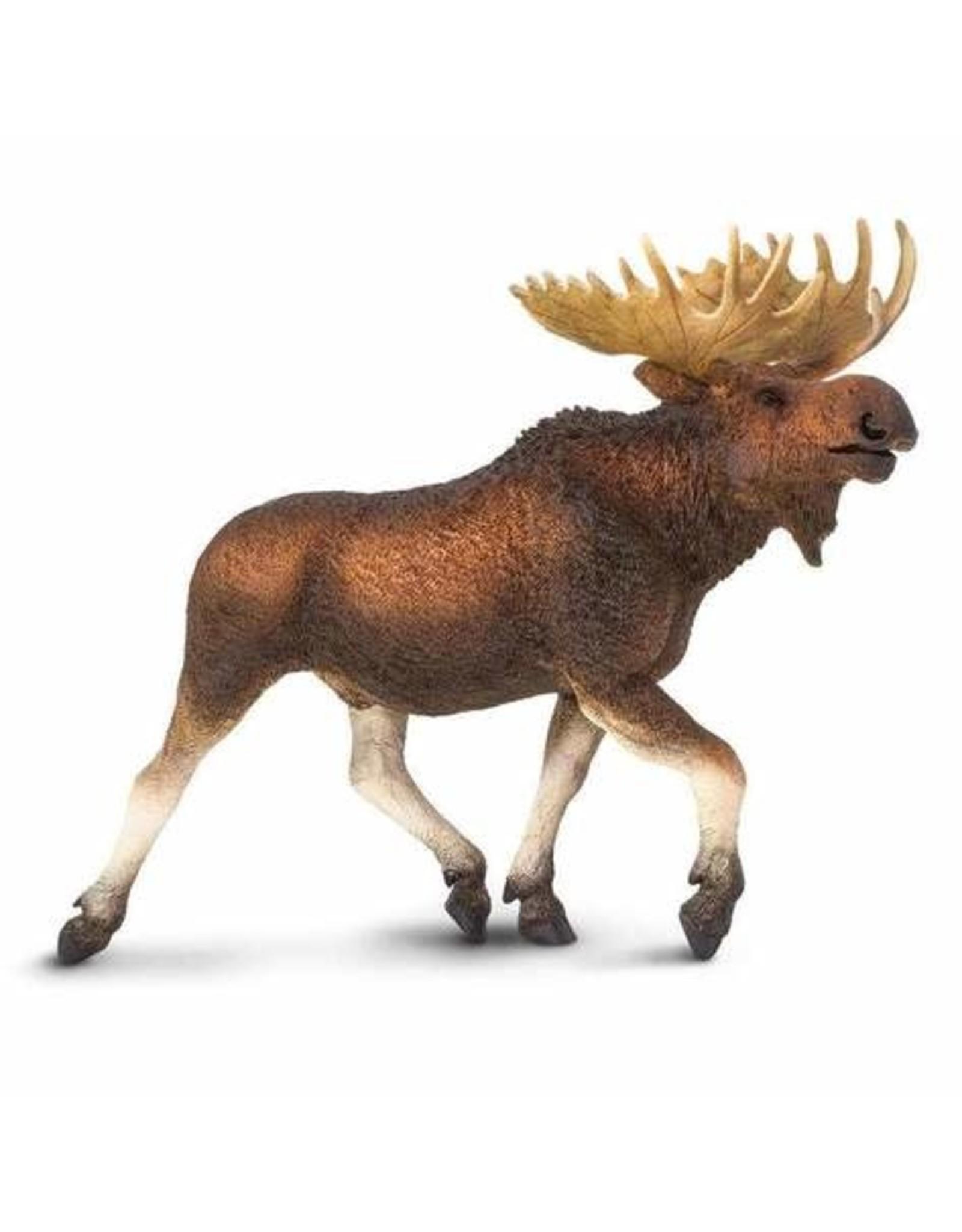 Safari Moose
