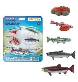 Safari Life Cycle of a Salmon