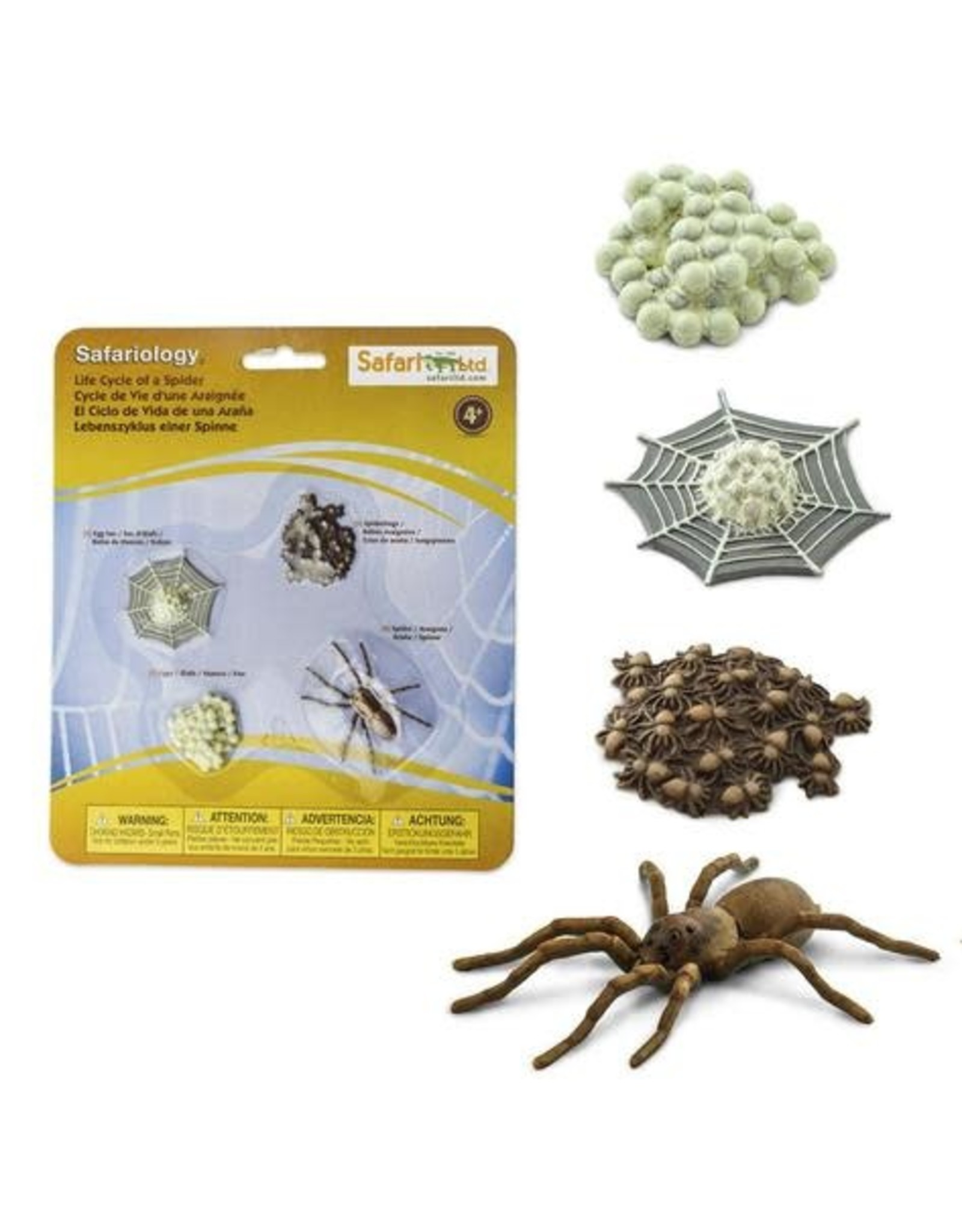Safari Life Cycle of a Spider