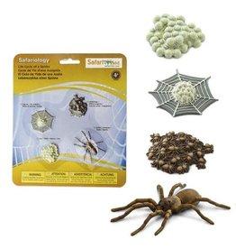 Safari Life Cycle of a Spider