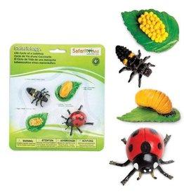 Safari Life Cycle of a Ladybug