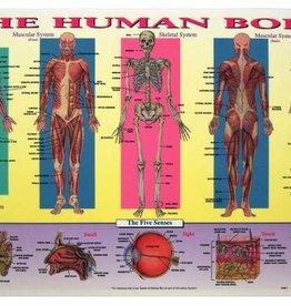 Castle Toys Placemat: Human Body