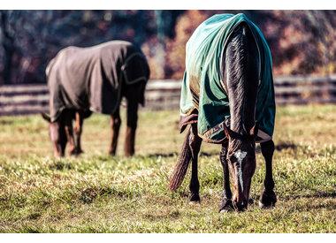 Horse Clothing