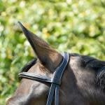 BOBBY'S ENGLISH FANCY STITCHED PADDED MONOCROWN SNAFFLE BRIDLE