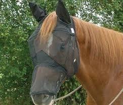 Cashel Quiet Ride Long nose ears