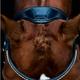 Schockemohle Schockemohle Malibue Anatomical Dressage Bridle