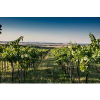 Pivnica Cajkov Volcanic Pinot Gris