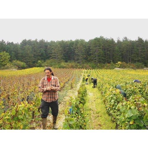 Didier Montchavet Montchavet Bourgogne Aligote