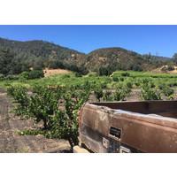 Bedrock Wirz Vineyard Riesling