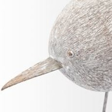 Standing snipe bird looking down