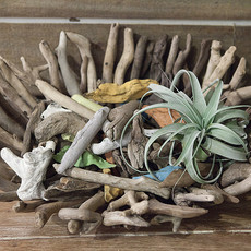 Driftwood  Bowl/Tray
