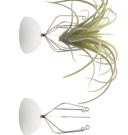 """Air Plant Holder - Wall Mount 2"""""""
