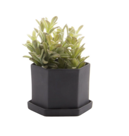 """Hexi with Saucer 3.5"""""""
