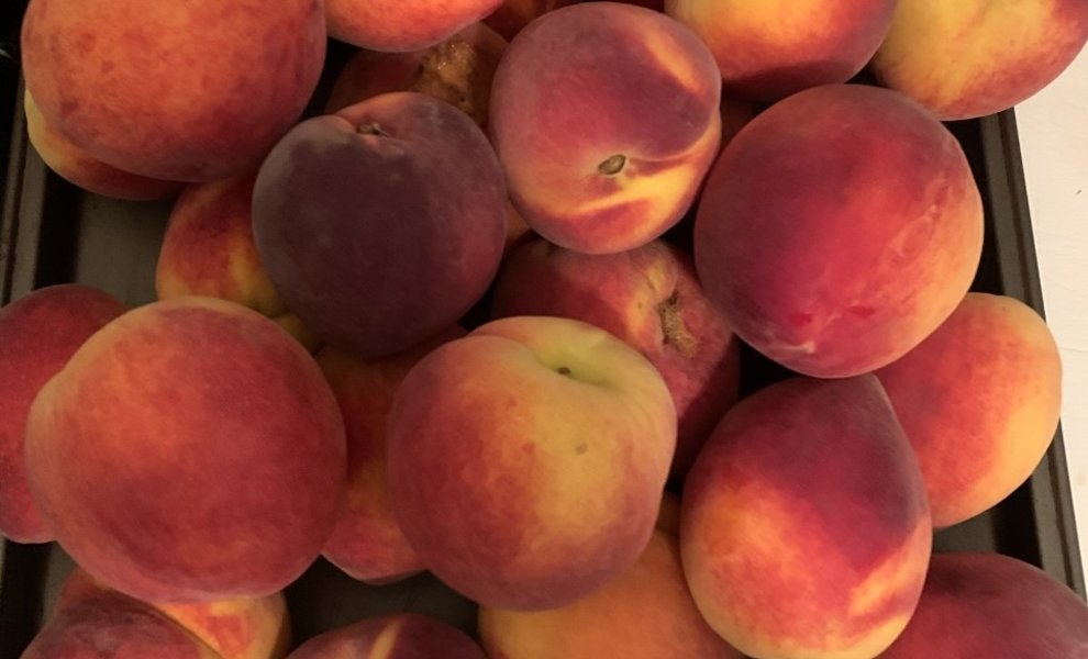 Welcome to Peach Season!