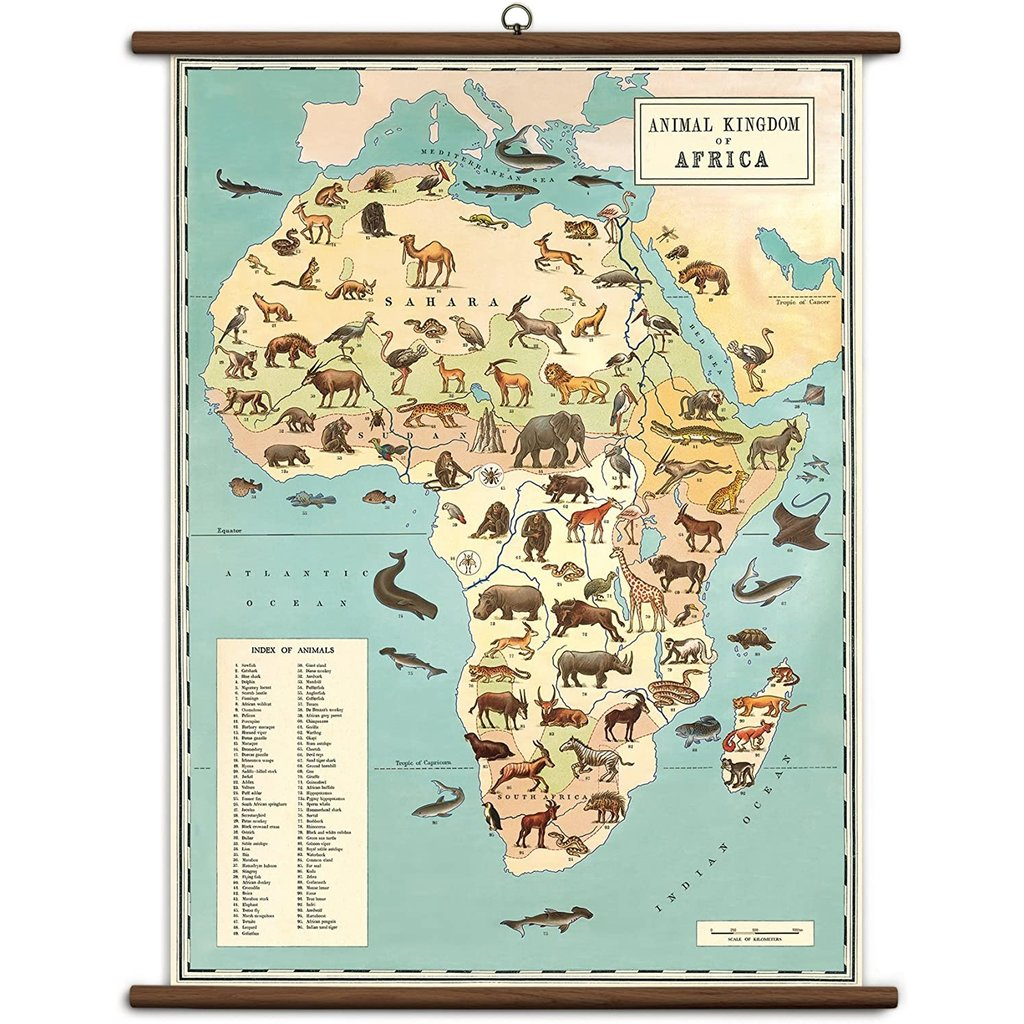 Vintage School Chart Animal Kingdom