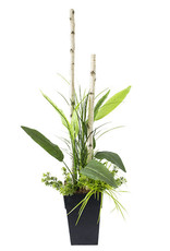 Veronneau Potted arrangement with birch branches and bird of paradise