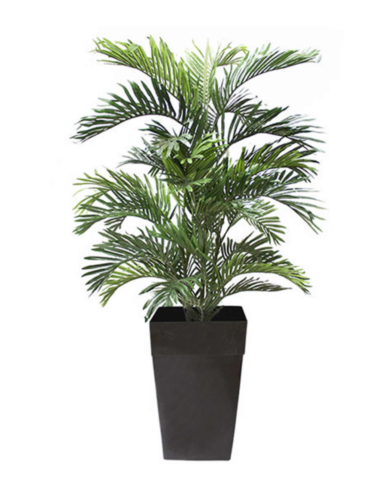 "Veronneau 5"" Areca palm tree"