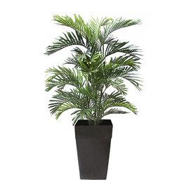 """Veronneau 5"""" Areca palm tree"""