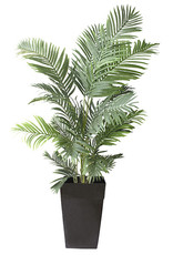 Veronneau Areca palm in black planter 6 x 4'