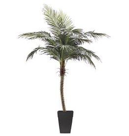 Veronneau 8' Phoenix palm tree