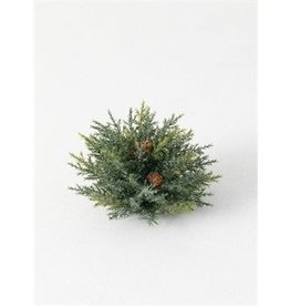 Frosted Arborvitae Orb ORB126