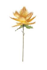 Botanica $3179