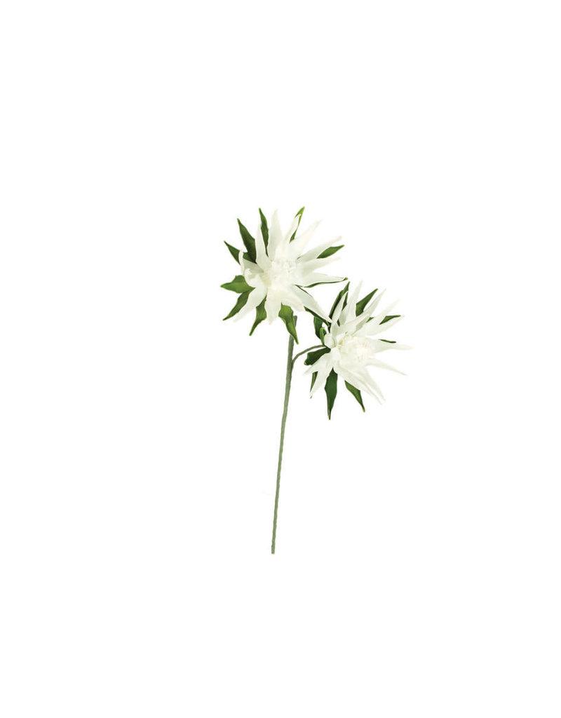 Botanica 982 clx982