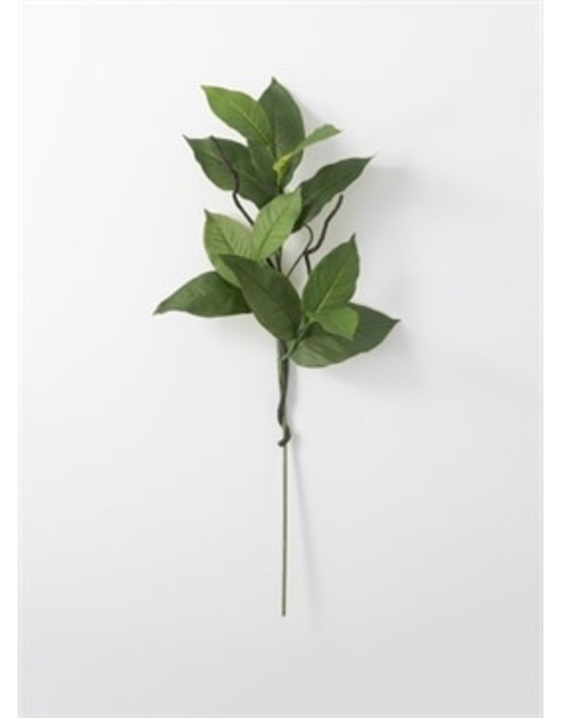 Salal leaf spray 02590s