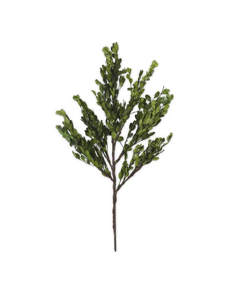 "22"" preserved boxwood stem 14681a"